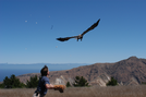 Releasing bald eagle in 2004