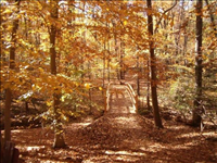 Fall colors on the Perimeter Trail Bridge, Greenbelt Park, 2015.. Perimeter Trail is 5.3 miles long and begins at the park entrance.