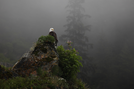 Eagles in the mist