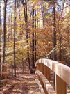 Fall colors on the Perimeter Trail, Greenbelt Park, 2015.. Perimeter Trail is 5.3 miles long and begins at the park entrance.