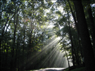 Sunlight through the forest canopy, Catoctin Mountain Park, 2014..