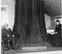 "Detail of L. Smaus stereo (RL-16,504). Handwritten on back: ""The Big Tree Room. First hotel in the Yosemite Valley, Cal. House built around a tree."" Man in photo is George Fiske. copied by Michael Dixon, copied July 1985"